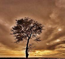 Spirit of the Golden Sun by Angelika Sielken