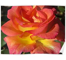 Autumn Sunset Rose Poster