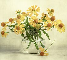 Helenium summer by Mandy Disher