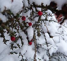 Snowy Berries by Zak1995