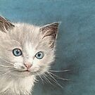 Cute Ragdoll Kitten Portrait by Felicity Deverell