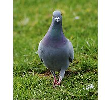 Pigeon walking Photographic Print
