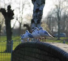 Several seagulls sitting on a stone fence by flashcompact