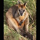 Wallaby by mysticaldreamz