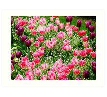 Paris Tulips Art Print