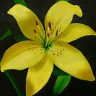 Yellow Lily. by Debra Freeman