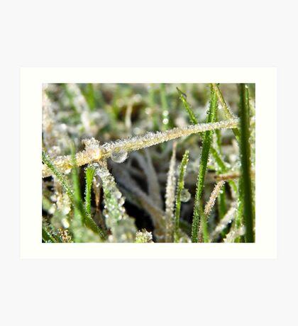 Encrusted Grass Blades Art Print