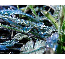 Blue Dew Photographic Print