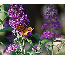Butterfly at Rest on Purple Flower Photographic Print
