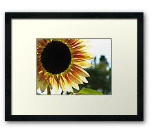 Fabulous Sunflower Framed Print