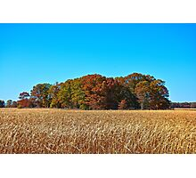 Autumn Island in an Ocean of Tall Grasses  Photographic Print