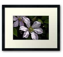 The Dark Side of Flowers 3 Framed Print