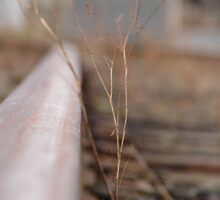 Railroad Ties by LadyEloise