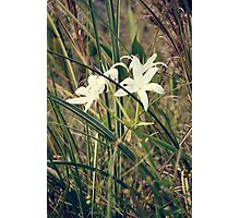 Random flower in swamp Photographic Print