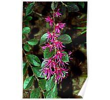 Fringe-like flowers Poster