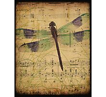 Dragonfly 2 Photographic Print