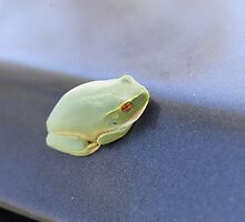 Baby Green Tree Frog by JessicaJade