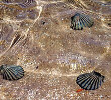 Faux shells by MarthaBurns