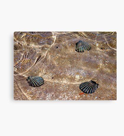 Faux shells Canvas Print