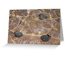 Faux shells Greeting Card