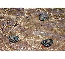 Faux shells Photographic Print
