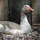 Mother Goose by Deborah Clearwater