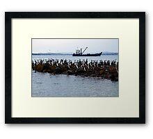 Cormorants at rest Framed Print