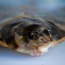 Flounder face by Alastair Creswell
