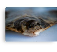 Flounder face Canvas Print