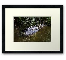 Alligator in the water Framed Print