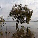 Lake  Woytchugga ,via  Wilcannia  by Virginia McGowan
