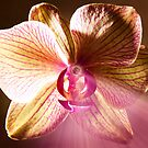 Glowing Orchid of Light by JonnisArt
