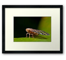 Leaf hopper with wings like stained glass Framed Print