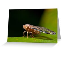 Leaf hopper with wings like stained glass Greeting Card