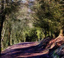 Coppice walkway  by Irene  Burdell