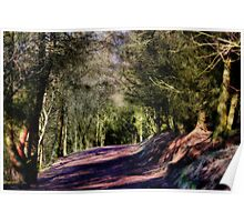 Coppice walkway  Poster