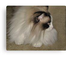 Rag Doll Cat Canvas Print