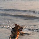 German Shepherd in the Surf Palolem by SerenaB