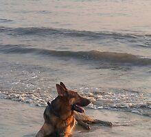 German Shepherd in the Surf Palolem by SerenaB
