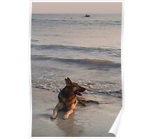 German Shepherd in the Surf Palolem Poster