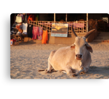 Bull on the Beach at Sunset Palolem Canvas Print