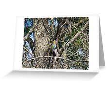 Australian parrot Greeting Card