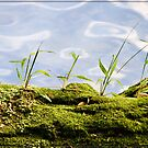 Moss & Grass on the banks of the creek by Chris Cohen
