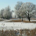 Winter Wetland The Oostvaardersplassen by Jo Nijenhuis