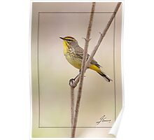 Branching Out - Male Palm Warbler Poster