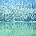 Pines by WeLikeBears