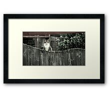 Right out My Backyard Series: Cat with No Name Framed Print