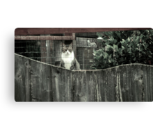 Right out My Backyard Series: Cat with No Name Canvas Print