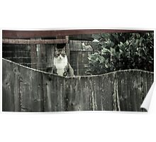 Right out My Backyard Series: Cat with No Name Poster