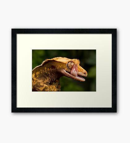 Crested Gecko Framed Print